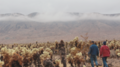 Cholla Garden in the fog (23862743953).png