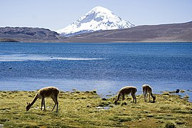 Chungara Lake and Volcan Sajama Chile Luca Galuzzi 2006.jpg