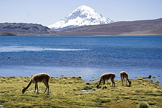 Lauca National Park - Image: Chungara Lake and Volcan Sajama Chile Luca Galuzzi 2006