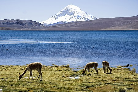 Chungara Lake in Lauca National Park, Chile