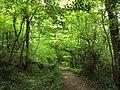 Cilcain Trail, near Loggerheads - DSC06106.JPG