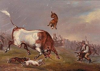 Old English Bulldog - Bull-baiting scene