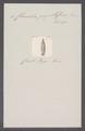 Clausilia papillaris - - Print - Iconographia Zoologica - Special Collections University of Amsterdam - UBAINV0274 088 10 0002.tif