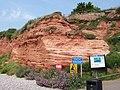 Cliffs at Budleigh Salterton. - geograph.org.uk - 198401.jpg