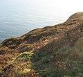 Clifftop - geograph.org.uk - 622780.jpg