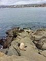 Coast of La Jolla, San Diego .jpg