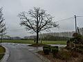 Cobrieux L'arbre de la liberté, lieu‐dit Le Mazet.jpg