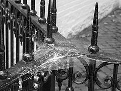 Cobwebs on fence.jpg
