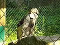 Condor-Gitter.jpg