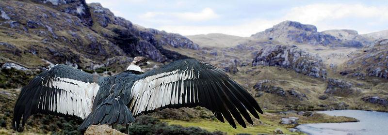 Habitad-y-ecosistemas-de-las-aves