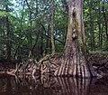 Congaree National Park (e7be325b-5bdb-4233-bbe5-28122eb4684e).jpg