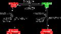 Control de l'activitat enzimàtica de la RuBisCO amb inhibidors naturals.png
