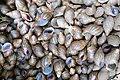 Coquilles d'escargot à São Tomé (2).jpg