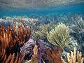 Coral Reefscape (5295750542).jpg
