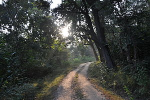 English: Track in the Jim Corbett National Par...