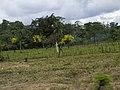 Costa Rica (6092136230).jpg