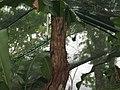 Costa Rica (6094192097).jpg