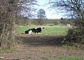 Cow and Gate - geograph.org.uk - 616495.jpg