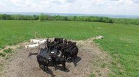 File:Cows reacting to a drone.webm
