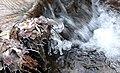 Cradley brook - Flickr - gailhampshire.jpg