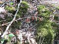 Craighead Forest Park 2011-10-02 Jonesboro AR 003.jpg