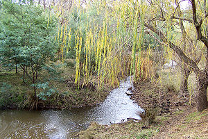 Napostá Stream - Image: Creek