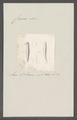 Criseis gadus - - Print - Iconographia Zoologica - Special Collections University of Amsterdam - UBAINV0274 080 07 0025.tif