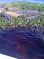 Crocodiles in the Everglades 4, 3.30.2010.jpg