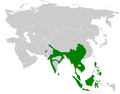 Culicicapa distribution map.png