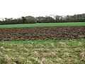 Cultivated fields east of Cutting's Road - geograph.org.uk - 1780083.jpg