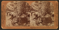 Cutting timber in the state of Washington, U.S.A, by Singley, B. L. (Benjamin Lloyd).png