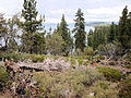DSC02815, South Lake Tahoe, Nevada, USA (8373795196).jpg