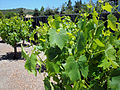 DSC28048, Chateau Julien Winery, Carmel, California, USA (4899570055).jpg
