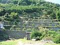 Dandan-batake Uwajima 20060928.jpg