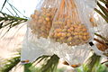 Dates. Jordan Valley, West Bank 100 - Aug 2011.jpg