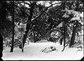 De Sparrenlaan in de winter - Regionaal Archief Alkmaar - FO1400059.jpg