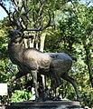 Deer1VenadosDF.JPG