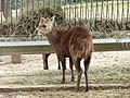 Deer (2379582567).jpg