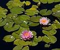 Denver Botanic Gardens (3855019346).jpg
