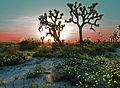 Desert in Spring (13944339503).jpg