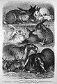 Die Gartenlaube (1874) b 431.jpg