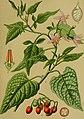 Die Giftpflanzen Deutschlands (1910) (20738507158).jpg