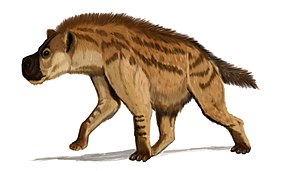 Dinocrocuta