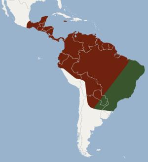 Black bonneted bat - Distribution map of the black bonneted bat (based on Best et al., 2002)