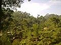 Doğal orman ( r. nazilli ) - panoramio.jpg