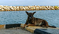 Dog feeling in Chacachacare Harbour.jpg