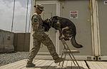 Dog handler's homegrown values, environment mirror her K-9 career 130424-F-SI788-331.jpg