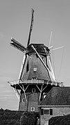 Dokkum, molen Zeldenrust. 20-09-2021. (actm.) 02.jpg