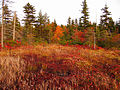 Dolly-sods-wilderness - West Virginia - ForestWander.jpg