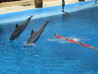 Mundomar - Dolphin show at Mundomar